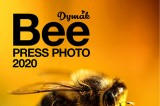Bee Press Photo 2020