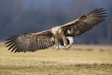 V�pravy za svetlom, �vod do wildlife fotografie