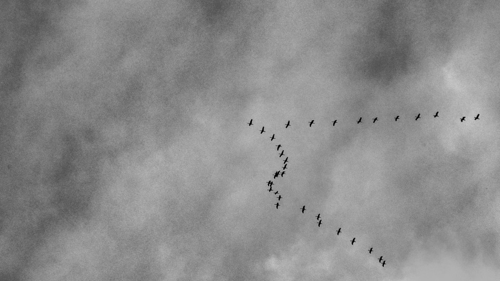 Blacj vtáky