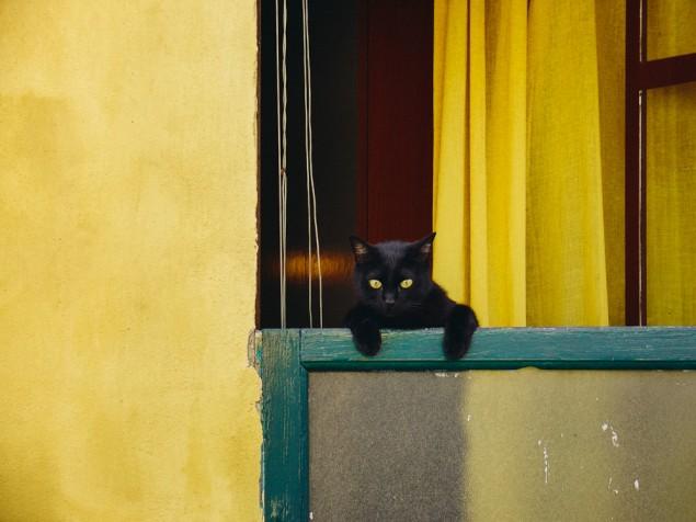 krásne čierne mačička porno