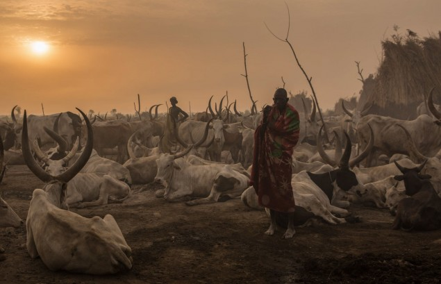 Foto: Stefanie Glinski/AFP. Morning in a cattle camp, South Sudan