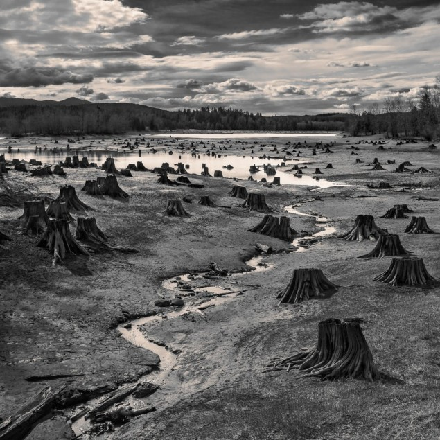 © Hal Gage, USA, Stumps, Alder Lake, Nisqually River, Oregon