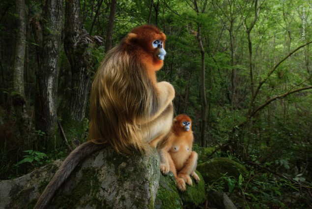 Foto: Marsel van Oosten, Holandsko,  The Golden Couple