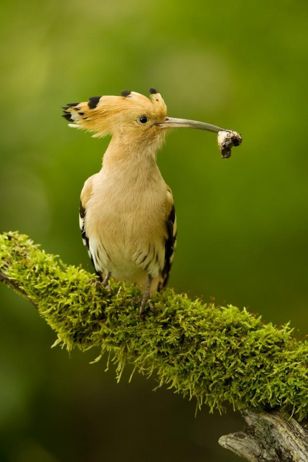 fotky z pekných vtáky