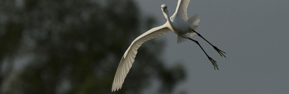 Pic môjho veľkého vtáka